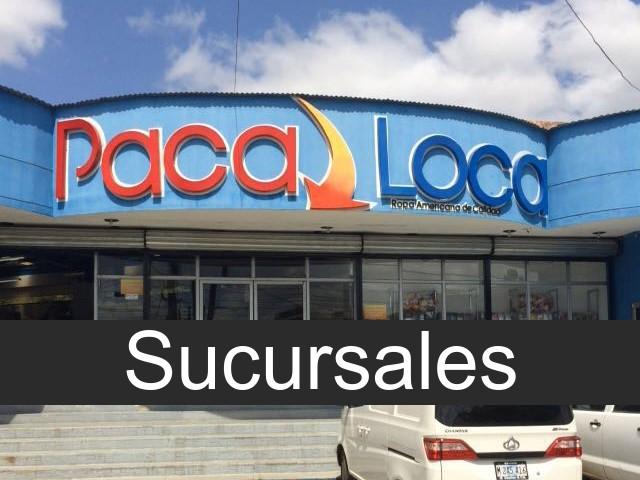 paca loca en Nicaragua
